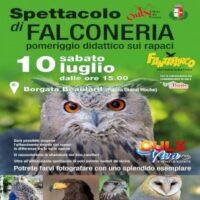 Spettacolo di falconeria a Oulx
